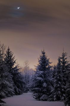 Winter Moonscape Photograph by Vee Robillard - Winter Moonscape Fine Art Prints and Posters for Sale
