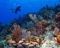 Image detail for -clear water with amazing visibility tropical fish reefs and corals and ...