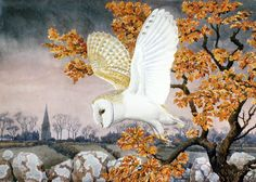 Barn Owl by Charles Frederick Tunnicliffe (1901 - 1979) ..... The Charles Tunnicliffe Society