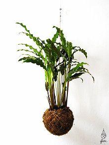 fiu plantas suspensas kokedama portugal | interiores