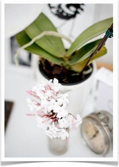 My absolute FAV flower Jasmine Jasmine, Outdoor Living, Home Goods, Indoor, Table Decorations, Floral, Jokes, Sayings, Natural