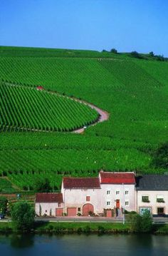 The Vineyards along the Moselle River