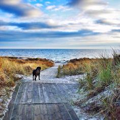 On the way to the beach in Falsterbo, Sweden. January 14, 2014. Photo by David Carlsson