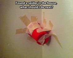 spiders!!
