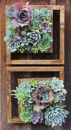 Succulent Frame, Vertical Succulent Gardens, Succulents Garden, Wood, Flowers, Garden, Plants, Succulents, Woodwind Instrument