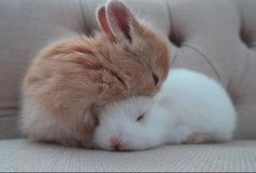 Cute Furry Animals List over Cute Animals For Backgrounds; Cute Baby Animals Colouring Pictures when Cute Animals Cartoon Characters Cute Baby Bunnies, Baby Animals Super Cute, Cute Little Animals, Cute Funny Animals, Cute Cats, Funny Cats, Baby Animals Pictures, Cute Animal Pictures, Pet Rabbit