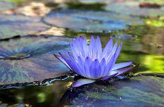 blooming by Karol Franks, via Flickr