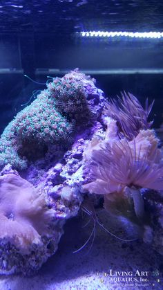 Living Art Aquatics Specializes In Bringing The Midwest And Chicagoland  Genuine And Professionally Designed Aquariums, Cabinetry, Maintenance U0026  More.