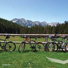 🚵♀️ Radeltipp: Schaumbergalm ab Bodinggraben Diese Einsteigertour verläuft ausschließlich im Nationalpark Kalkalpen und führt zur bewirtschafteten Schaumbergalm. Von hier aus kann man bei guter Fernsicht die Gipfel der Gesäuseberge (Nationalpark Gesäuse) sehen. 🚵  #nationalparkkalkalpen #tourderwoche  #outdooradventures #findyourpark #neverstopexploring #berge  #mtb #biken #fahrradliebe #radeln #radliebe #mountainbiking  #cyclinglifestyle #naturliebe #allmountain #radeln #fahrradtour Mountain Biking, Berg, Mtb, Mountains, Nature, Wilderness, Mountain Range, Tours, National Forest