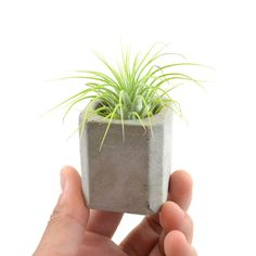 Concrete Mini Planter