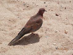 Egyptian bird at the beach.