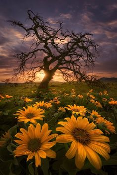 photo scenery Fields of Gold at Sunset ~ Rowena Crest, Oregon Fields Of Gold, Beautiful Sunset, Beautiful World, Beautiful Flowers, Beautiful Pictures, Beautiful Morning, Landscape Photos, Landscape Photography, Nature Photography