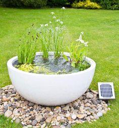 petit bassin aquatique -récipient-blanc-plantes-aquatiques-fleurs-déco-galets