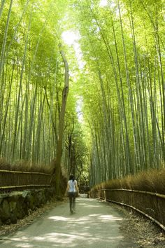 <p>Walking into this extensive bamboo grove is like entering another world – the thick green bamboo stalks seem to continue endlessly in every...