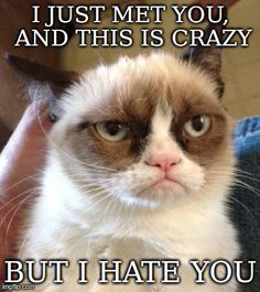 Grumpy Cat - I've been getting annoyed with how many memes are being made of this cat, but this is a pretty good one