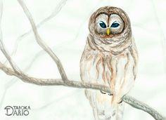 Coruja em aquarela sobre papel opaline feita pelo ilustrador Dario Taboka