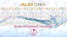 Аврора - Внеклеточный матрикс. Состав и структура