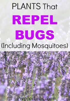 Plants That Repel Bugs Including Mosquitoes