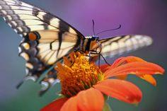 fotos de mariposas exoticas