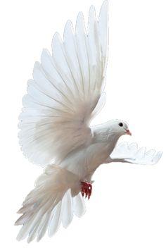 dove - Google Search
