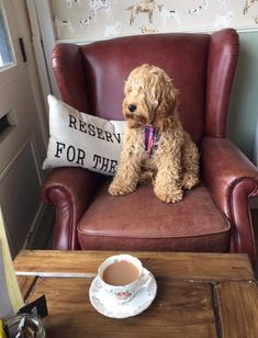 10 of the Best Dog Friendly Cafes | STYLETAILS