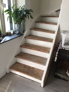 My stairs, selfmade, wood, eiken, trap.