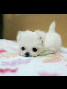 Puppy:-)