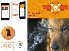 dogsos -  Es una app inspirada y diseñada para fomentar la adopción y fortalecer la cultura del tutor responsable