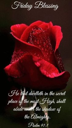 Wet Rose Friday Blessing friday happy friday friday quotes friday blessing friday images friday pics friday sayings friday image quotes Blessed Morning Quotes, Happy Friday Quotes, Blessed Friday, Blessed Quotes, Morning Blessings, Morning Prayers, Good Morning Quotes, Friday Sayings, Bible Quotes Images