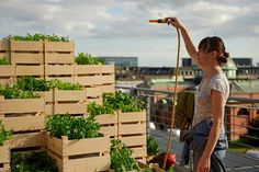 To create a wall for your roof top space - use boxes/crates to create a vegetable and herb garden.