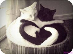 Just too cute! (This is my fantasy cat combo - one black, one white....if I wasn't so darn allergic to them!)