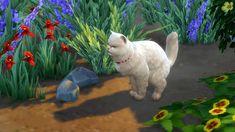 Nature's Kitty Litter by K9DB [#ts4_bb] [#ts4_bb_pet]