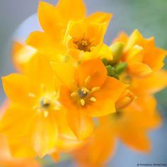 © Photoglobus, Michael Feigl, orange