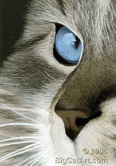 Scratchboard and Acrylic, by Christina Langman. Cat's Eye IV