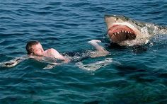 Shark Attack: Man surfing is freaked out by Great White Shark. Shark Week, Great White Shark Attack, Types Of Sharks, Shark Facts, Swimming Memes, Writing Pictures, Dangerous Animals, Scary Animals, Funny Animals