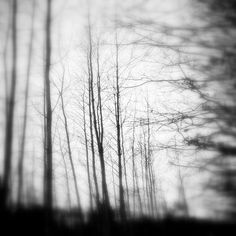 Forest, photography by Mara Mitchell