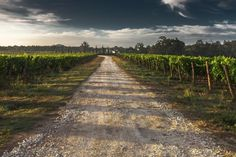 country-lane-428039_640