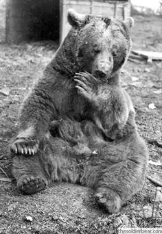 Wojtek The Bear Is A Polish War Hero