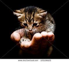 Cute kitten in hand. by Vinogradov Illya, via Shutterstock