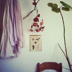 http://instagram.com/irotorizumu