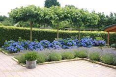 Picture result for evergreen garden - Innen Garten - Eng Back Gardens, Small Gardens, Outdoor Gardens, Boxwood Garden, Evergreen Garden, Garden Privacy, Farmhouse Garden, Contemporary Garden, Garden Planning
