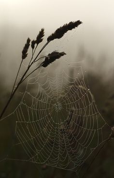 Greek myth: Arachne was a woman who wove beautiful pictures. But was turned a spider by Athene. Dewy webs of autumn. Spider Art, Spider Webs, All Nature, Natural World, Mother Nature, Mists, Nature Photography, Creatures, Landscape
