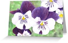 """""""White and purple Pansies flowers"""" Greeting Cards & Postcards by Savousepate on Redbubble #greetingcard #postcard #stationerycard #watercolor #painting #watercolorpainting #flowers #pansies #pansy #spring #purple #white #green"""