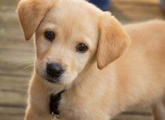 Commend New York for Creating Animal Abuser Registry