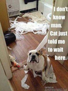 ❤ ❤ ❤ I don't know man... #English #Bulldog #life #dogs