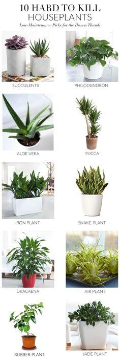 Jade plants need full sun in order to grow properly and need…  gardener ideas, vegetable gardener, backyard gardener, gardener for beginners  #holidays #events #gift #home #decor #humor #illustrations