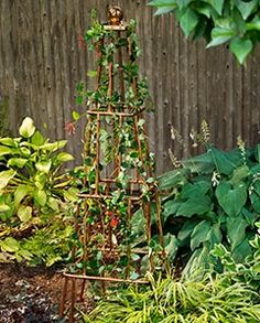 Transform plumbing tubing and fittings into an elegant garden accent. The noble trellis comes in many shapes and sizes, all in the service of giving flowering vines an attractive scaffolding on which to climb. This version in copper can be built for about as much as wood options you'd find at the garden center.