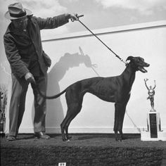 Arranging Greyhound Winner for Picture with its Trophy