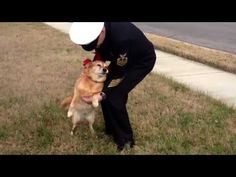 [VIDEO] Dog Battling Cancer Reunites With Owner After His Return from Deployment