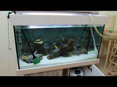 4 Adımda Akvaryum Temizliği | Akvaryum Nasıl Temizlenir Aquarium, Fish Stand, Aquarius, Fish Tank, Fishbowl